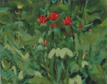 indian paintbrushes in the forest