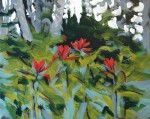 Indian paintbrushes under poplars