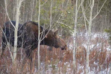moose2sm