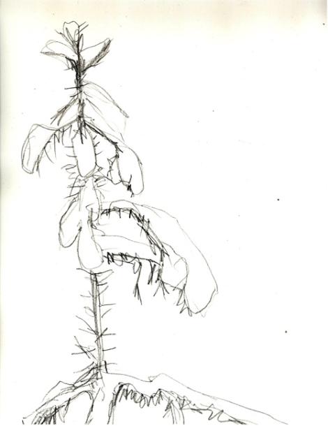 drawing jan 7