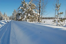 our long driveway